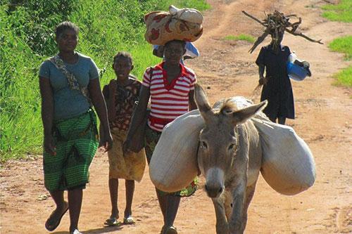 莫桑比克:为食品和营养安全部SETSAN提供技术支援进行监测